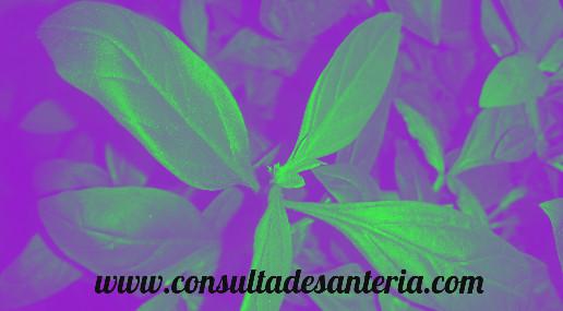 plantas amarre santería