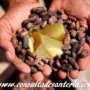 Orí o manteca de cacao- consulta santería